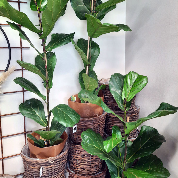 viherkasvit2