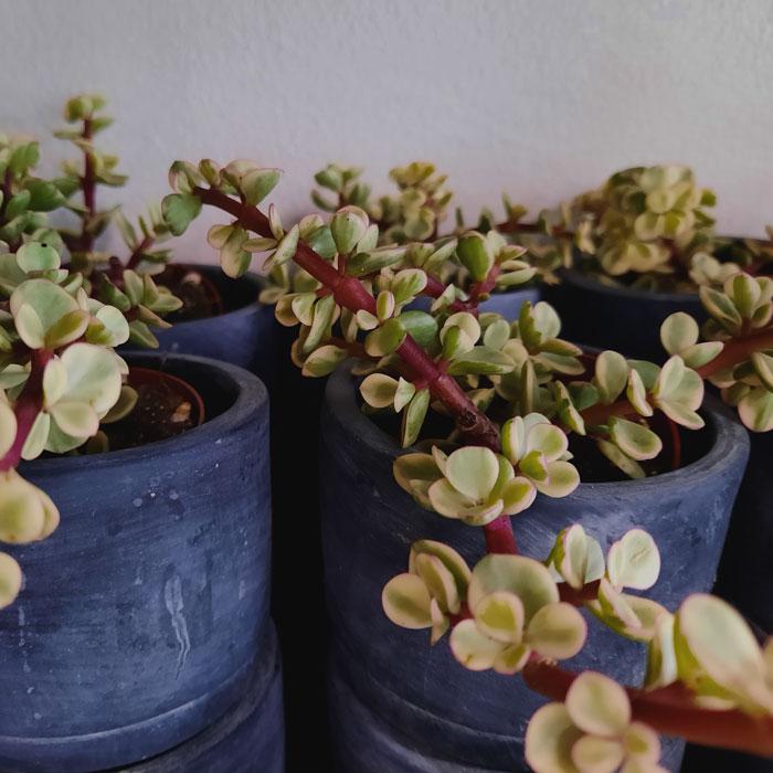 viherkasvit4